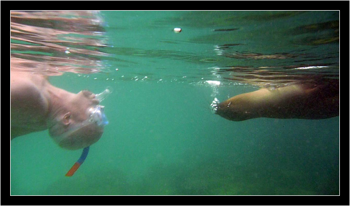Video framegrab of Arlo swimming with a sea lion