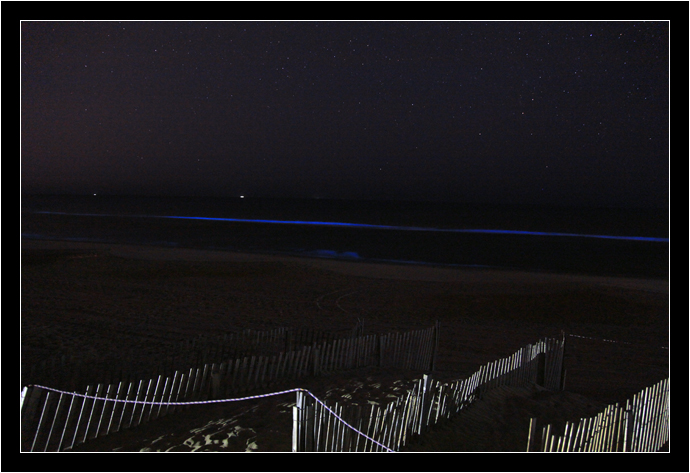 Bioluminescent display at Nags Head