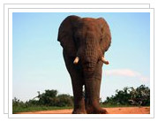 Addo Elephant Park Photos