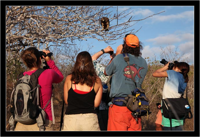 Galapagos Hawk and its photographers
