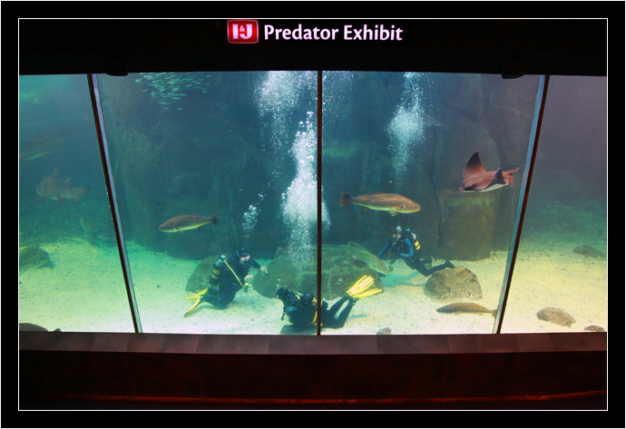The Predator Tank